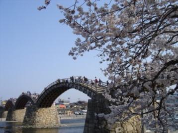 錦帯橋と桜2